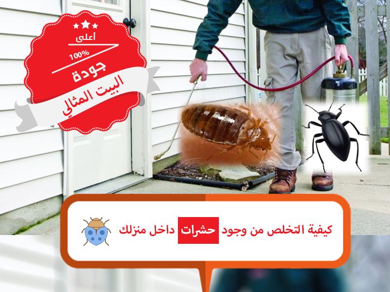 نصائح للتخلص من وجود حشرات داخل المنزل