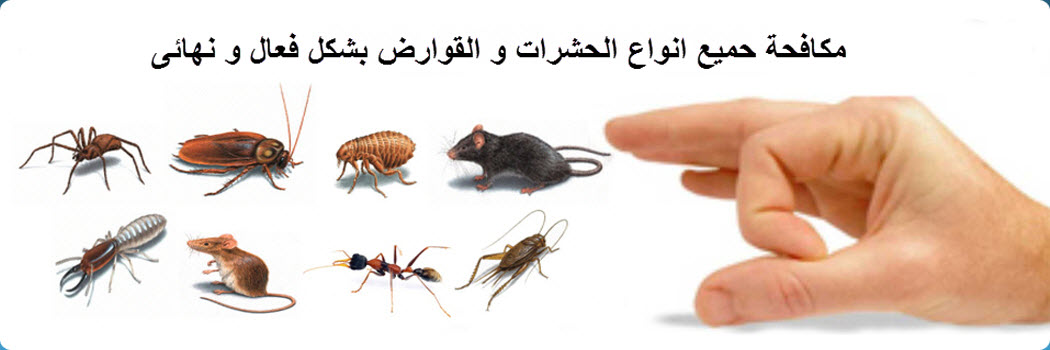 Image result for صور مكافحه الحشرات
